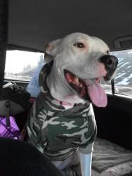 Highlight for Album: Lola goes to Flagstaff, AZ. 01/2011